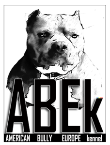 American Bully Europe